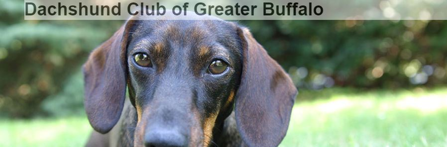 Dachshund Club of Greater Buffalo